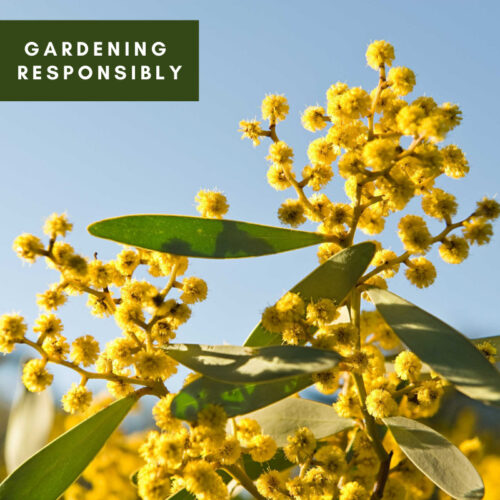 Gardening Responsibly