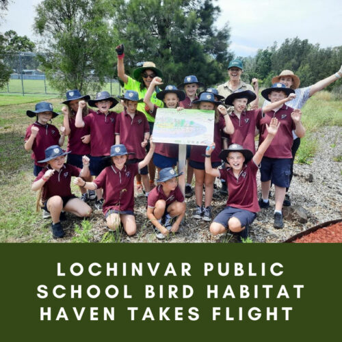 Lochinvar Public School bird habitat haven takes flight