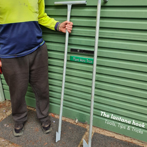 Tools, Tips and tricks: The lantana hook (credit Dungog Commoners Landcare)