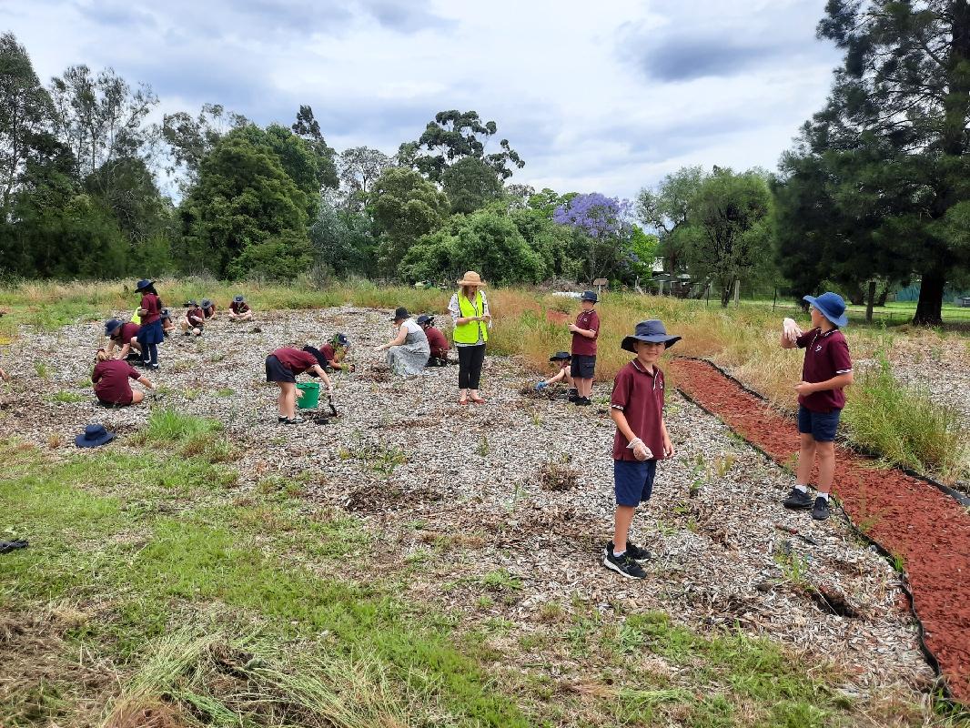 Hunter region Landcare  Before Lochinvar Primary School