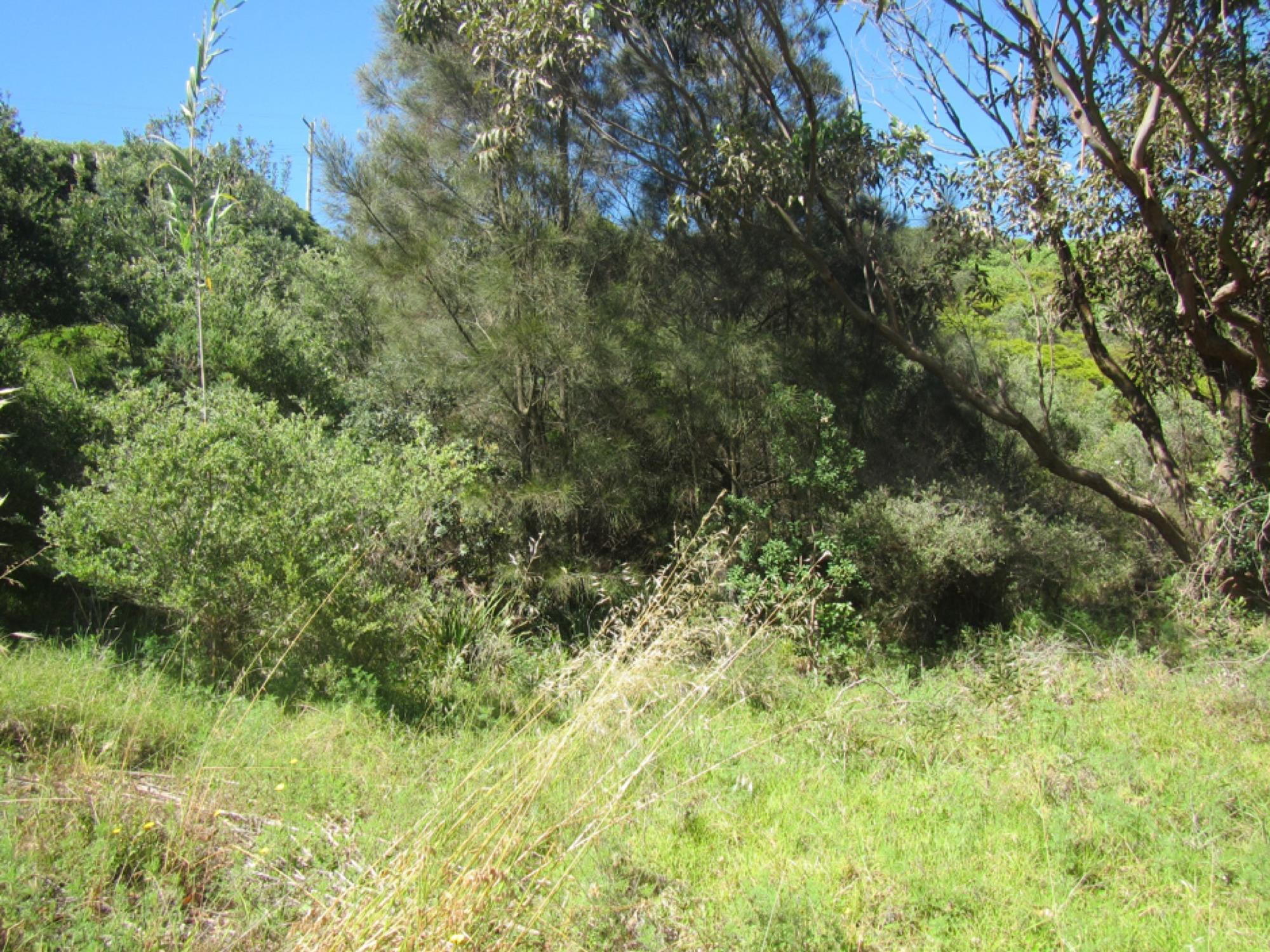 Obelisk Hill - Arcadia Park Landcare, The Hill