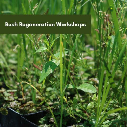 Bush Regeneration Workshops – Tanilba Bay