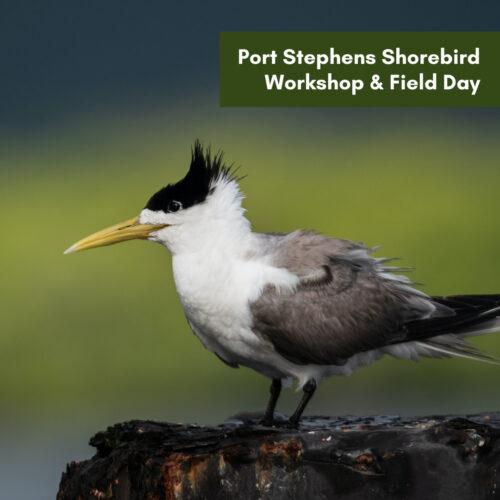 Port Stephens Shorebird Workshop & Field Day – Soldiers Point
