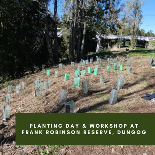 Sustaining the Williams Valley – Tree Planting – Dungog