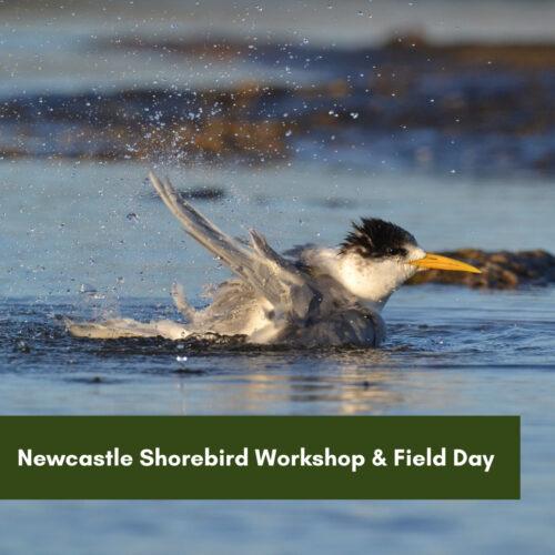 Newcastle Shorebird Workshop & Field Day