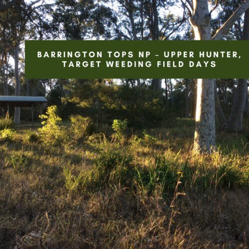 Barrington Tops NP – Upper Hunter, target weeding field days