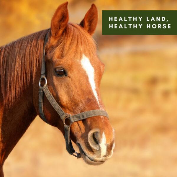 Healthy Land, Healthy Horse