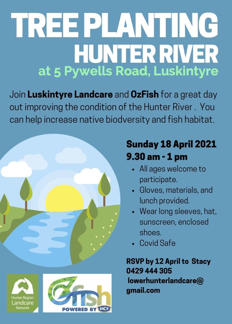 Hunter River tree planting (1)