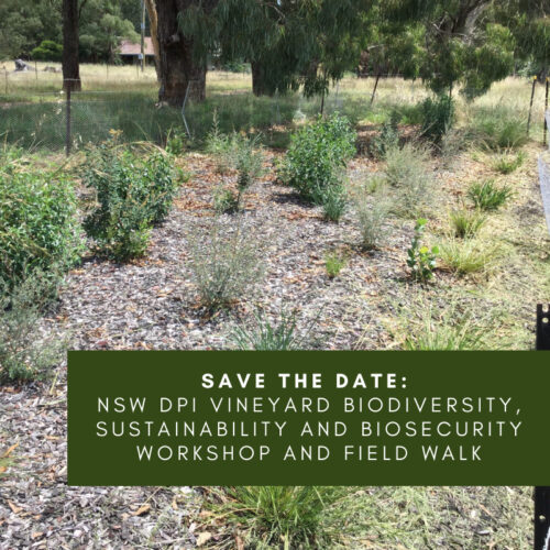 NSW DPI Vineyard Biodiversity, Sustainability and Biosecurity Workshop and Field Walk