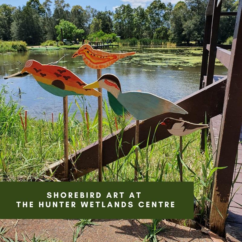 Shorebird Art at the Hunter Wetlands Centre