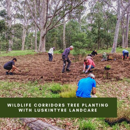 Wildlife Corridors Tree Planting with Luskintyre Landcare