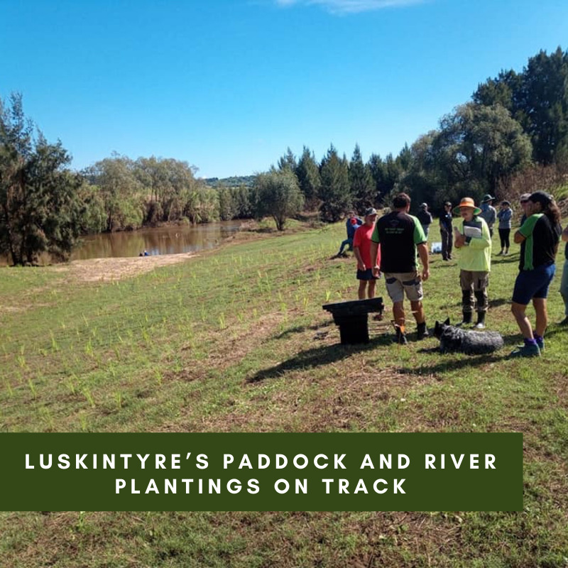 Luskintyre's paddock and river plantings on track