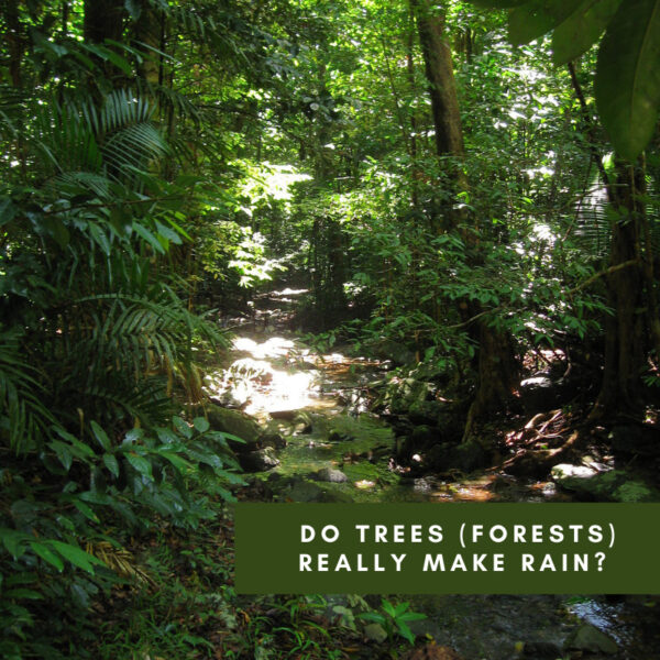 Do trees (forests) really make rain?  Or do areas with high rainfall grow forests?