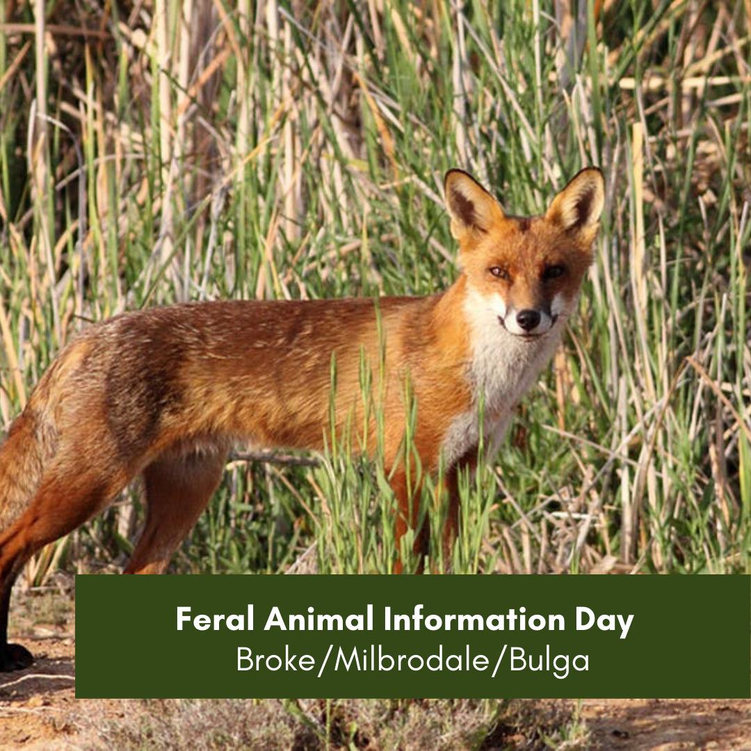 Feral animal BrokeMilbrodaleBulga