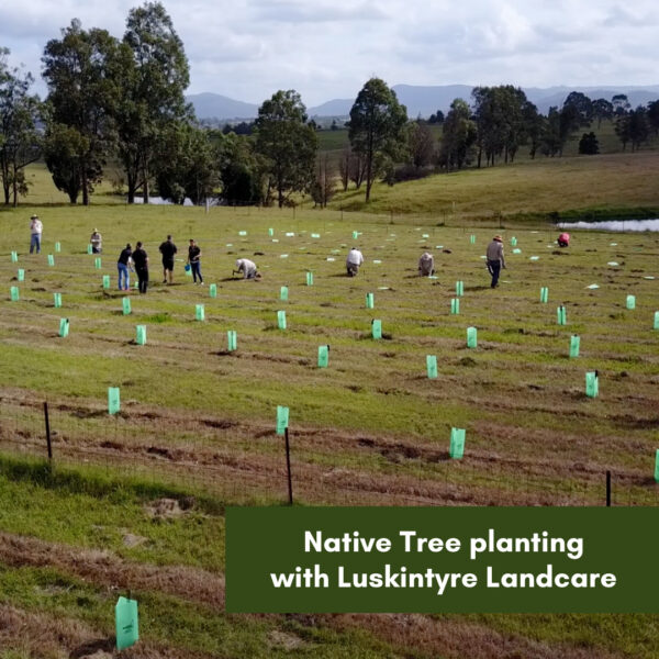 Native Tree planting with Luskintyre Landcare