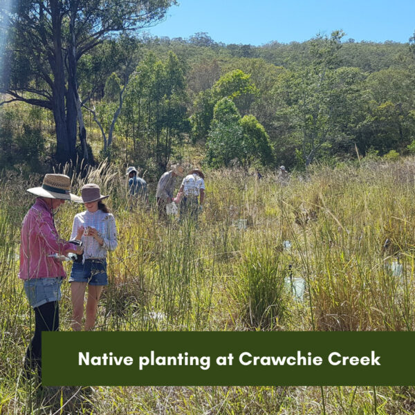 Native planting at Crawchie Creek