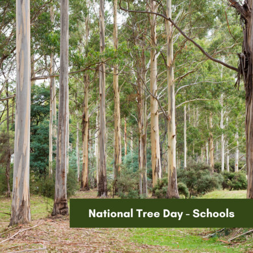 National Tree Day – Schools