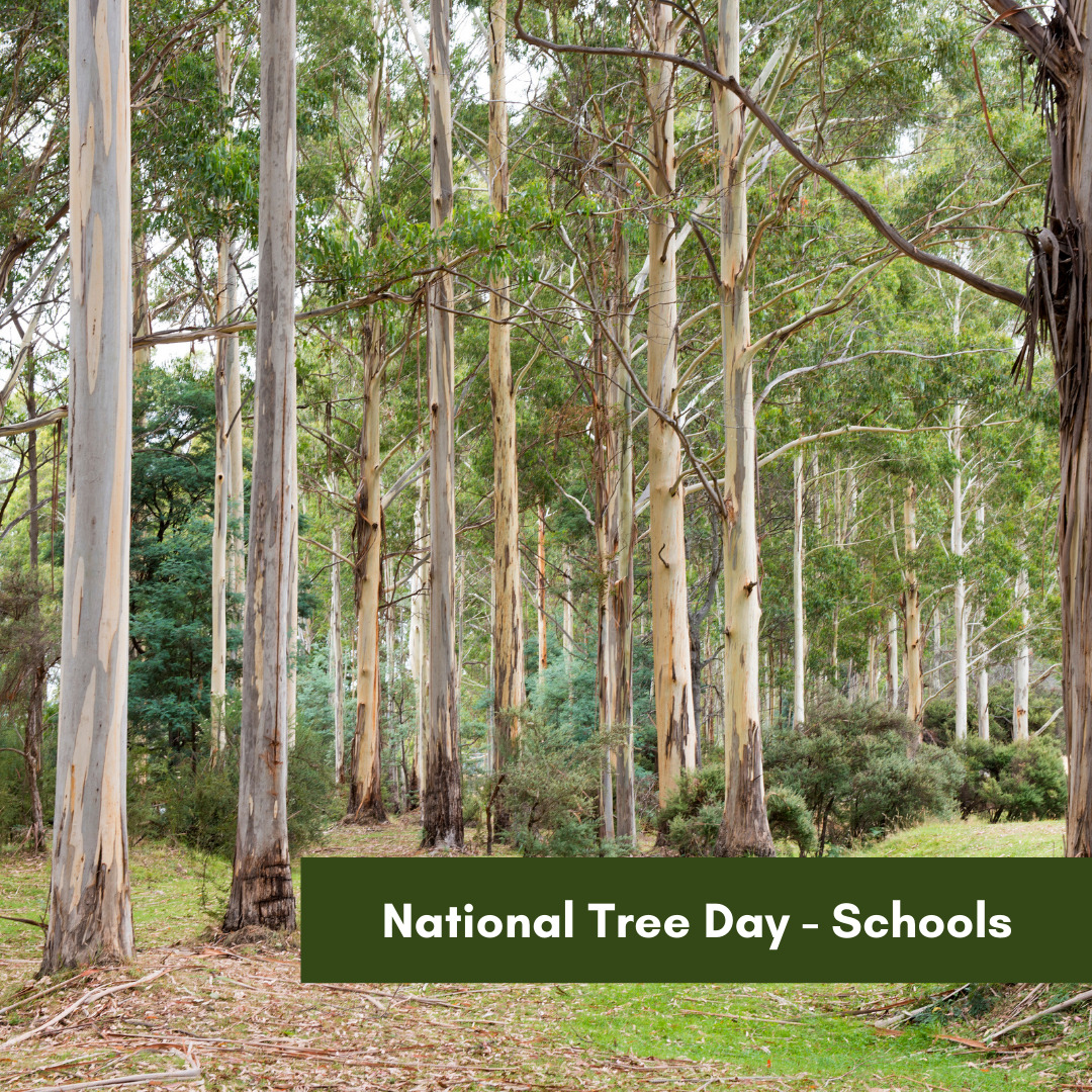 National Tree Day - Schools