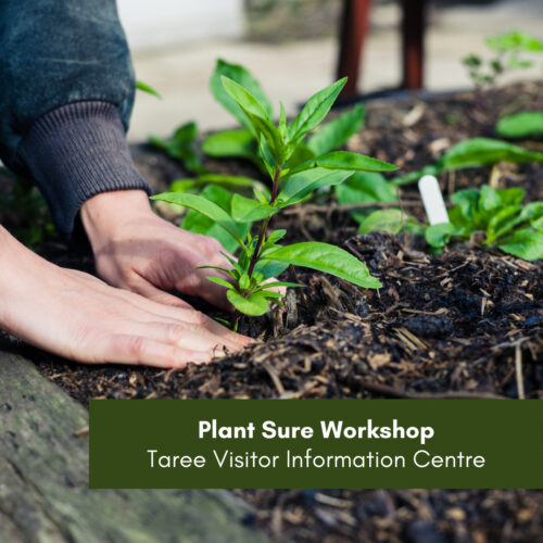 CANCELLED – Plant Sure Workshop – Taree Visitor Information Centre