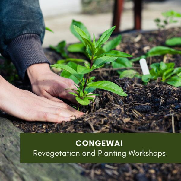 Congewai Revegetation Workshop