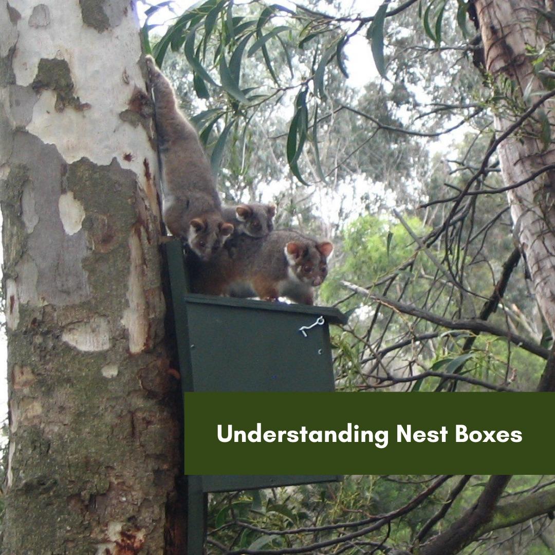 Understanding Nesting Boxes