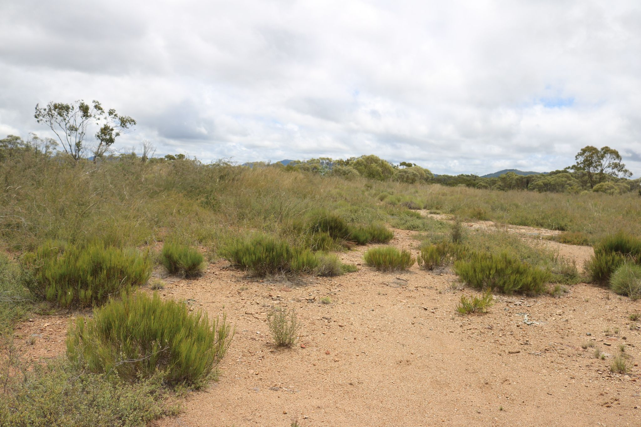 HRLN-Serpents-and-Spinifex