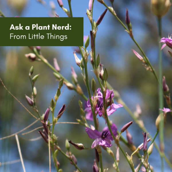 Ask a Plant Nerd: From Little Things