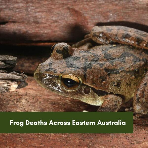 Frog Deaths Across Eastern Australia