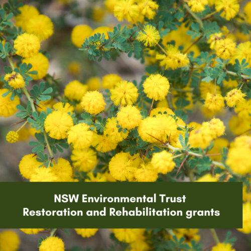 NSW Environmental Trust Restoration and Rehabilitation grants