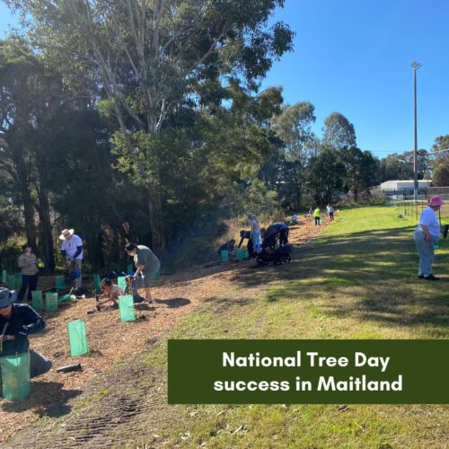 National Tree Day success in Maitland