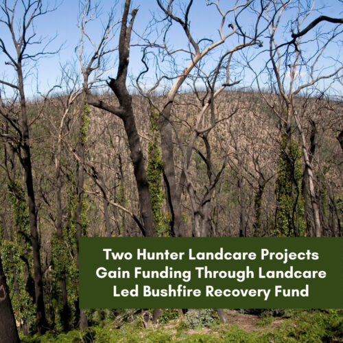 Two Hunter Landcare Projects Funded – Landcare Led Bushfire Recovery Fund