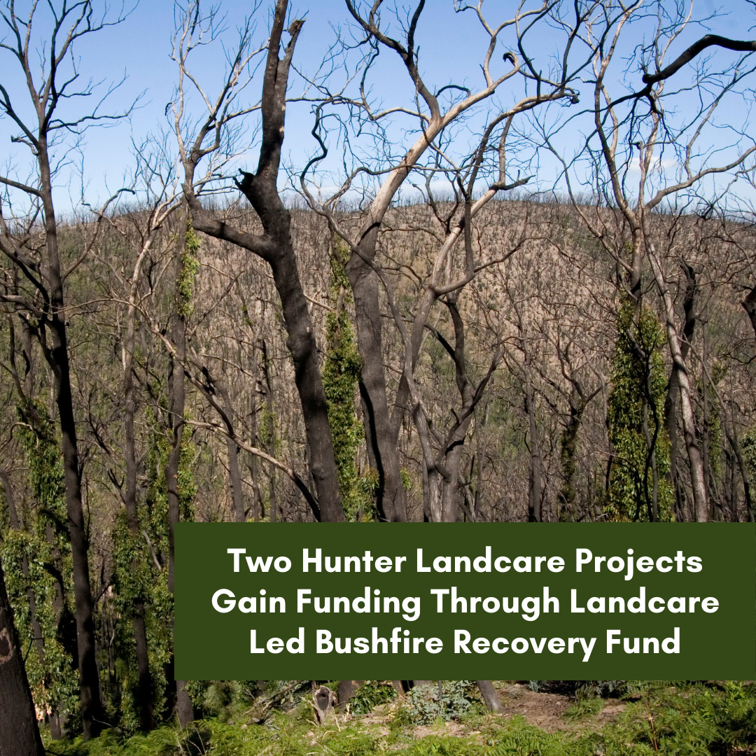 Two Hunter Landcare projects gain funding