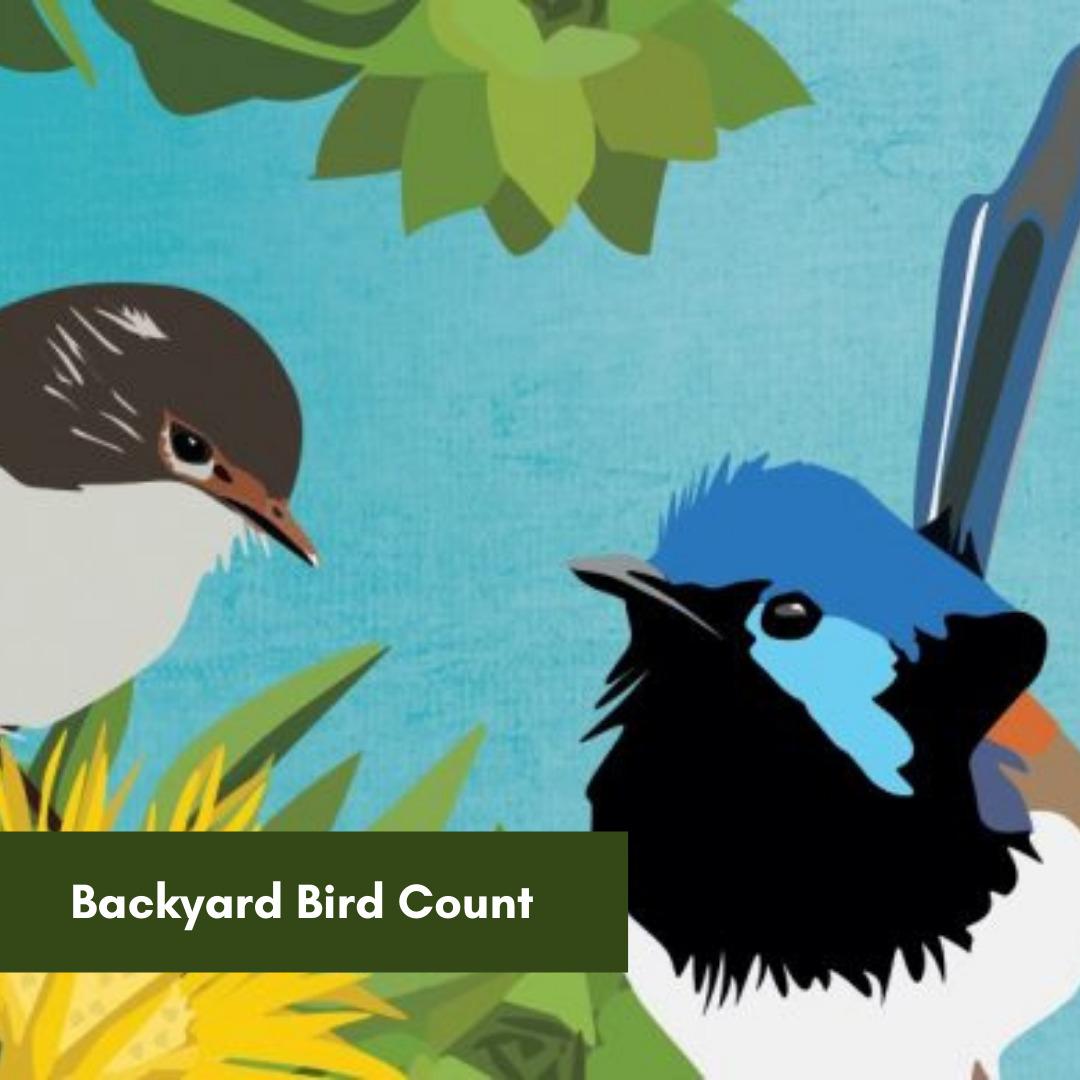 Backyard-Bird-Count