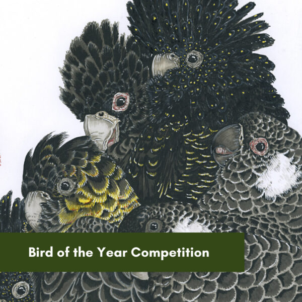 Bird of the Year Competition.