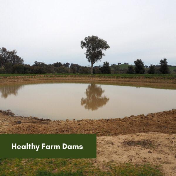 Healthy Farm Dams