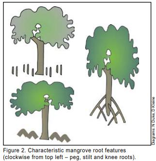 Mangroves-Landcare