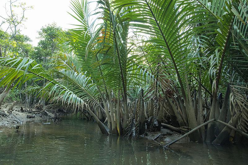 The-Nipa-Palm